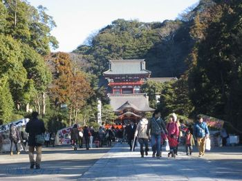150201鎌倉八幡宮.jpg